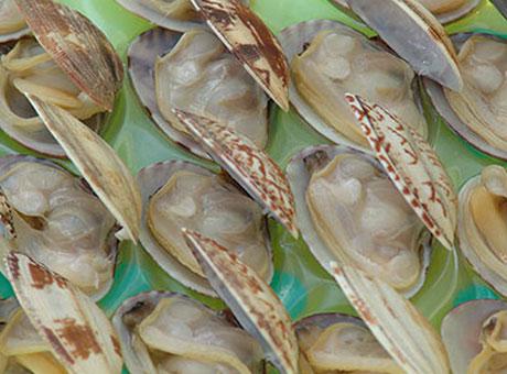 漂烫杂色蛤
